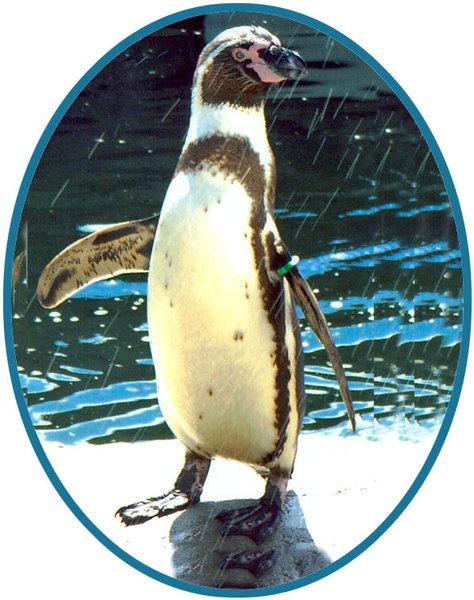 Piglet - Our Famous Penguin